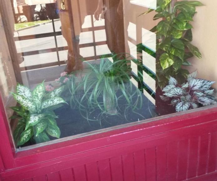 Decoración de interiores con plantas