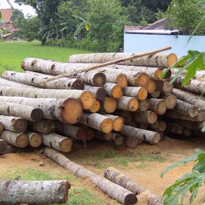 La mejor madera junto a los mayores bosques de España