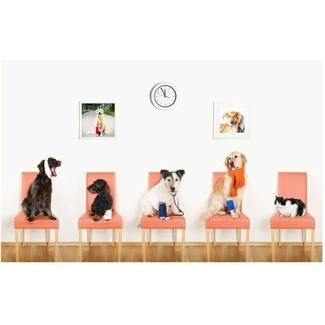 ¿Cuánto cuesta el servicio veterinario?