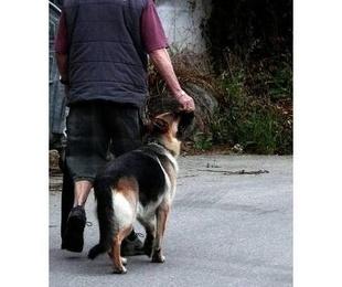 Renovación del permiso de Animales Peligrosos