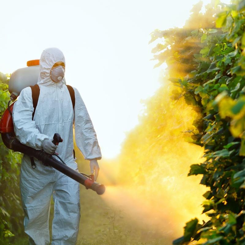 Fumigations: Services de Desinfecciones Ibiza