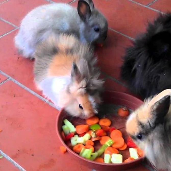 Principales cuidados para un conejo
