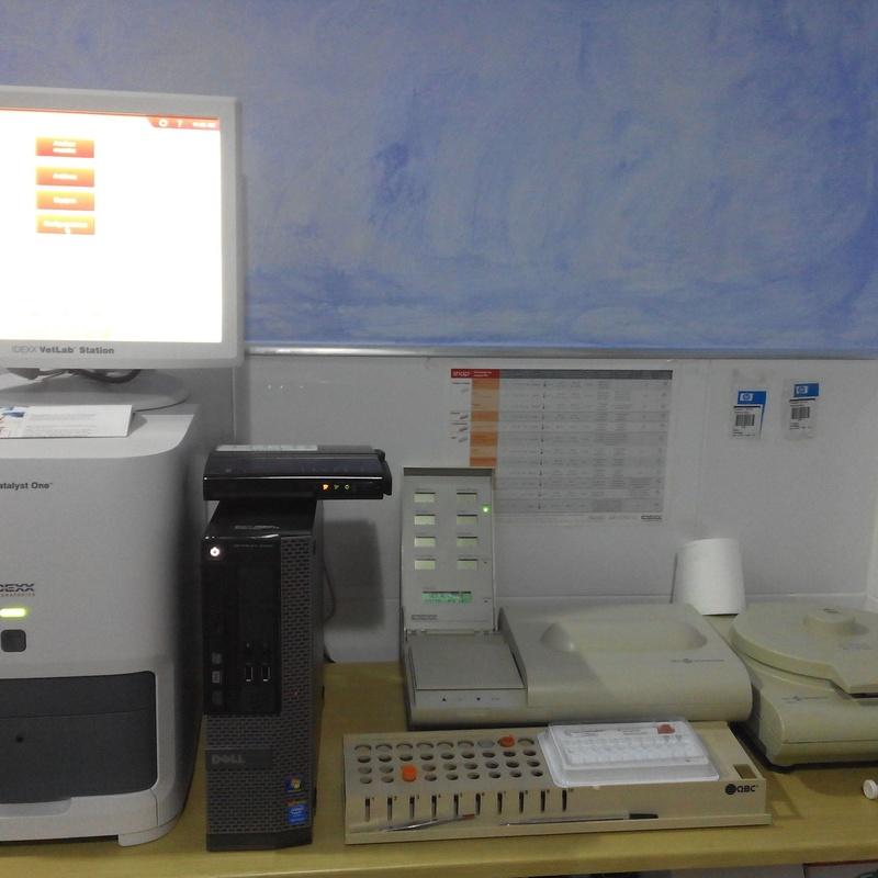 Analítica sanguínea: Servicios de Clínica Veterinaria Rocafort