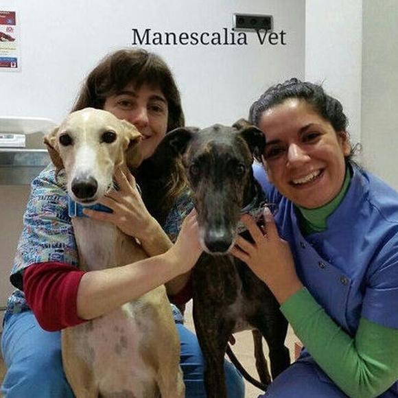 ESTERILIZACIÓN: Novedades  de Manescalia Veterinaris