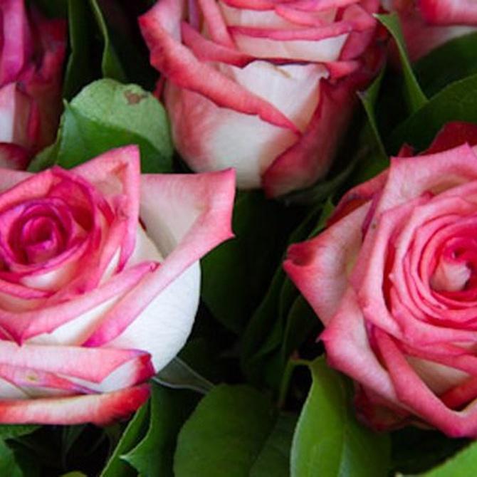 Trucos para conservar y secar las flores