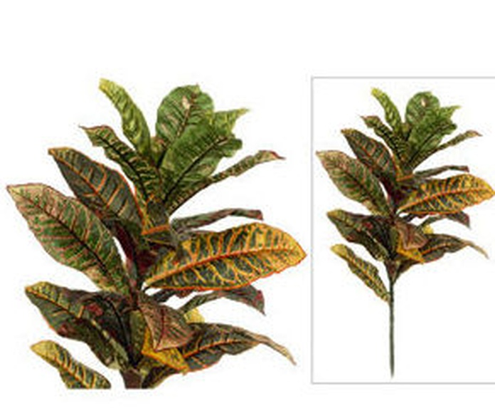 Crotons Simple Nature