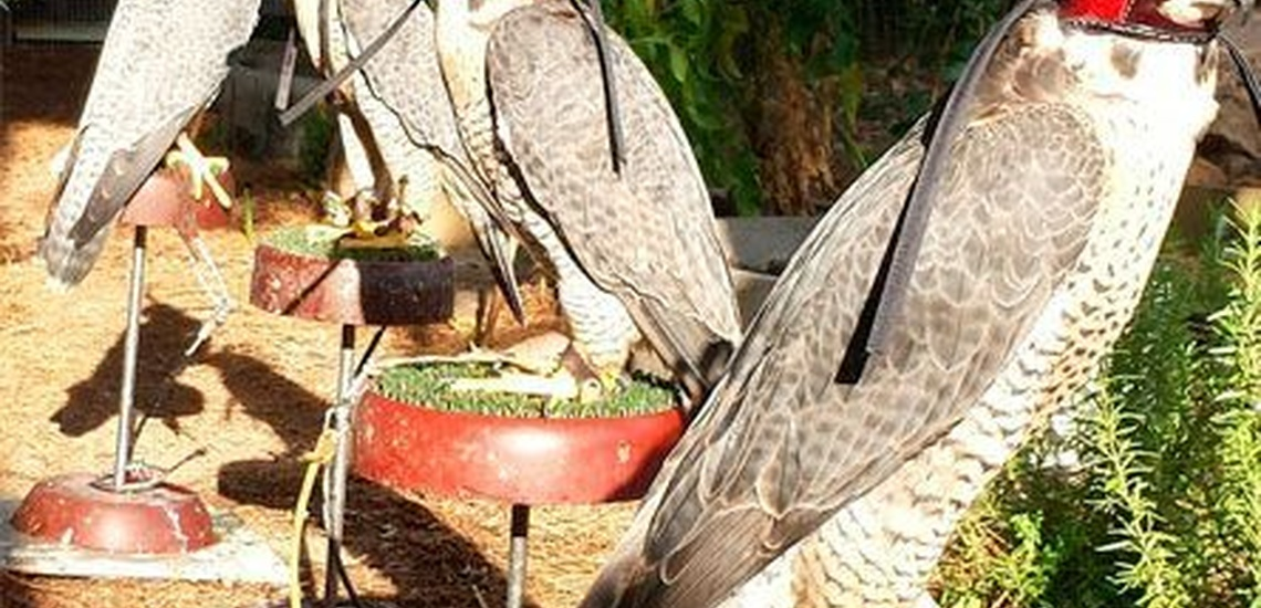 Especialistas en el control de plagas de palomas en Alcázar de San Juan
