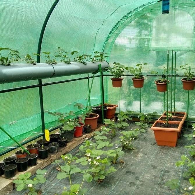 Cuenta con tu propio invernadero para plantas