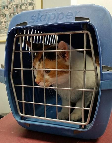 Admite mascotas: Servicio de Málaga Taxi