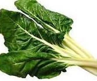 Abeto plateado Ref. 7 ( Árbol ): Productos de Danimayos Crea Tu Jardin
