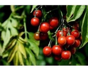 Nutrición: Irene Soriano
