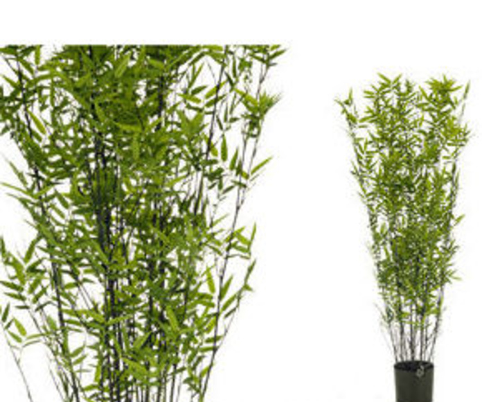 Árbol bambú oriental black 135cm
