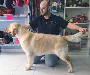 Cosmética canina en Madrid