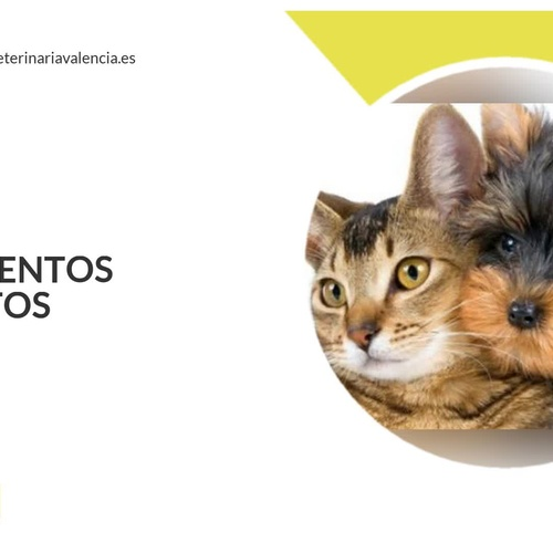 Veterinarios en La Pobla de Vallbona | Guau Veterinaris