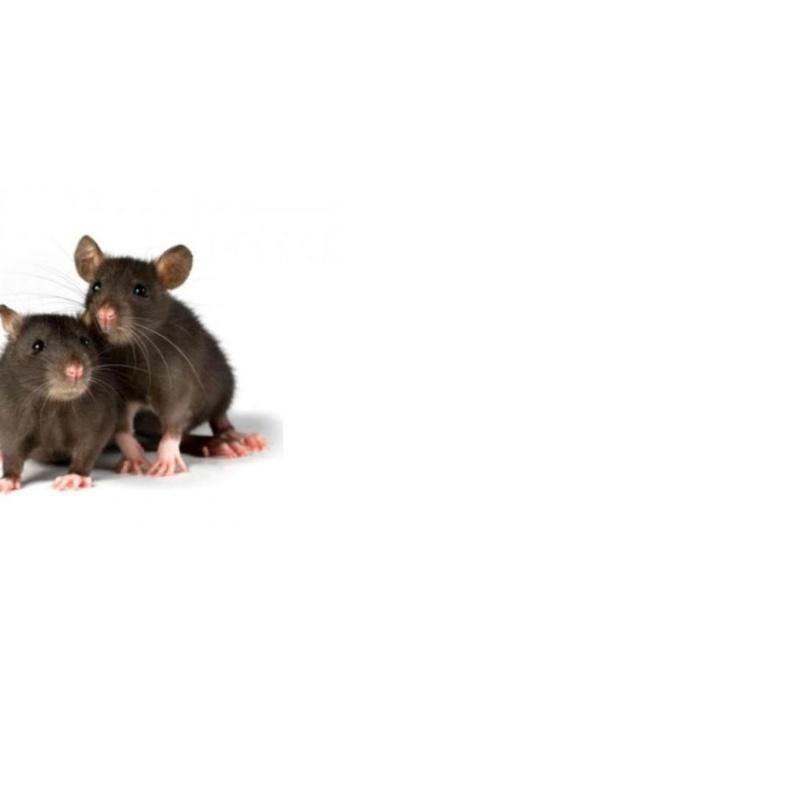 Eliminación de plagas: Servicios de Dys - Hy