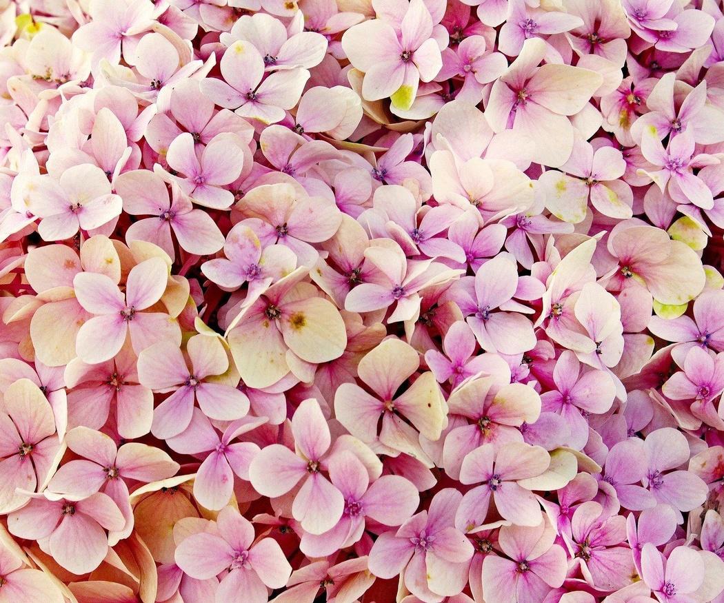 Plantas con flor que no deben faltar en tu jardín