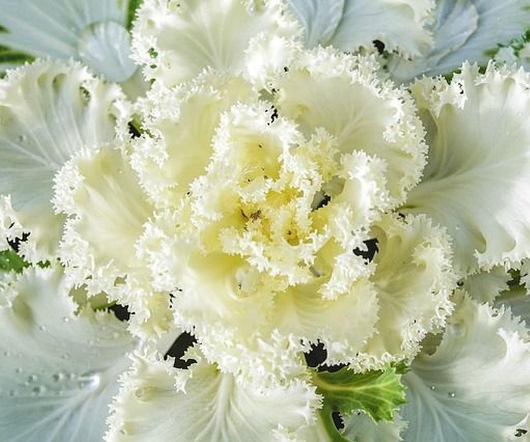 Tu jardín en invierno: cuidados básicos