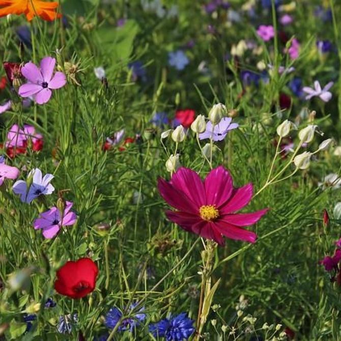 El mantenimiento del jardín según la estación del año