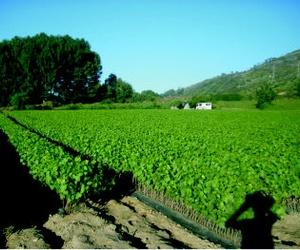 Galería de Viveros agrícolas y forestales en  | Viveros José López