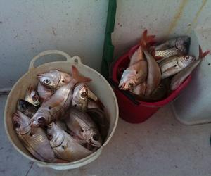 Salidas para  pescar en Guipúzcoa