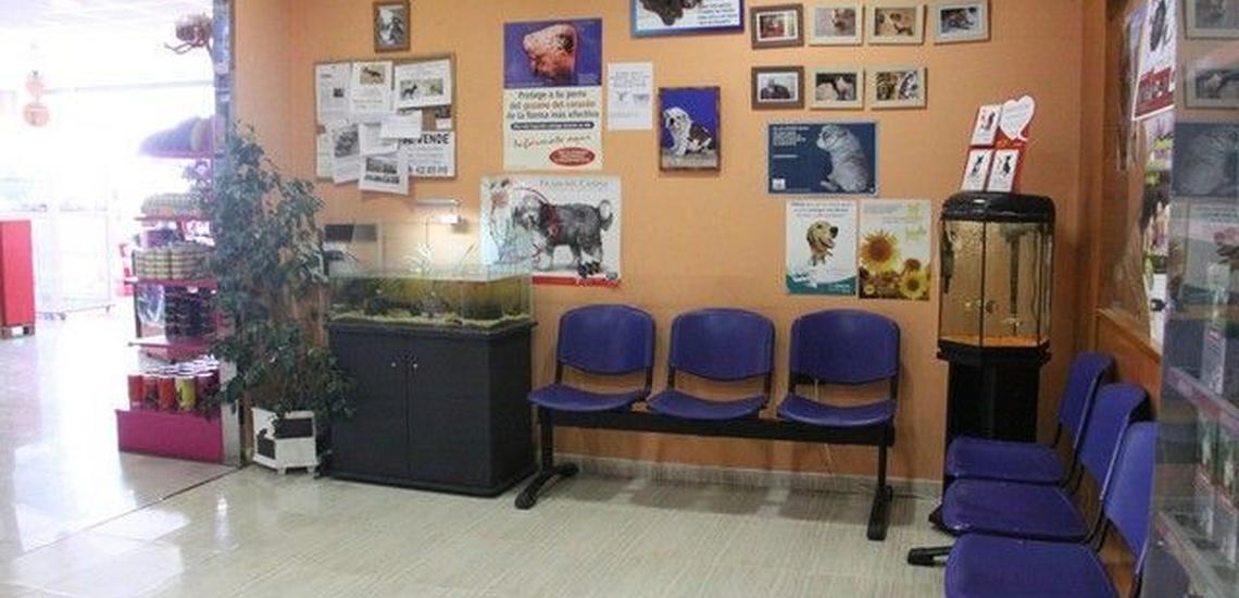 Clínica veterinaria en Molina de Segura, comprometidos con su bienestar