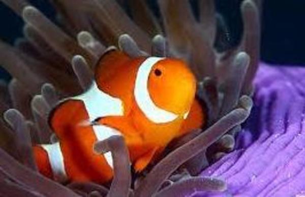 Tienda de peces: Servicios de Cuore Tienda de Animales