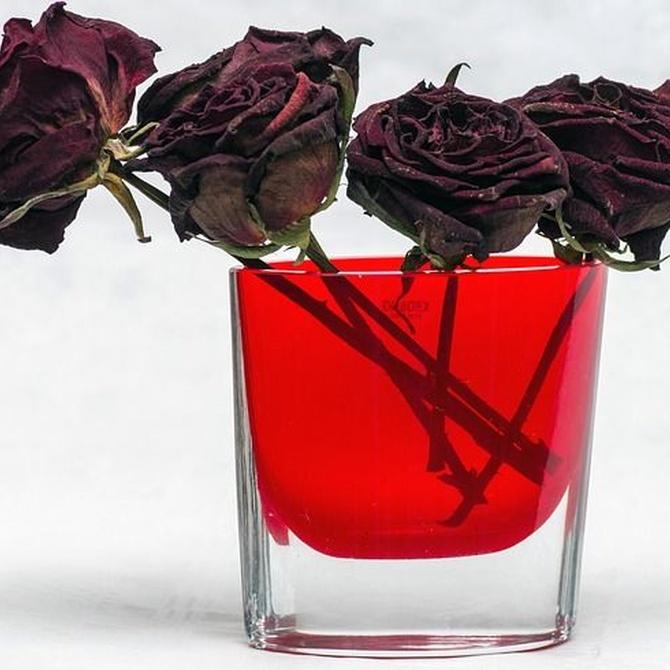 Cómo secar una flor especial