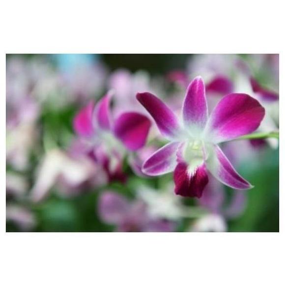 Cuidado de plantas: Mantenimiento de Jardines de Jardinería Suso