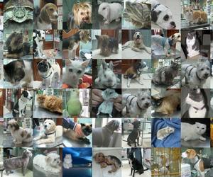 Collage Homenaje 25 años C.Veterinaria Getafe-Gracias por su confianza.