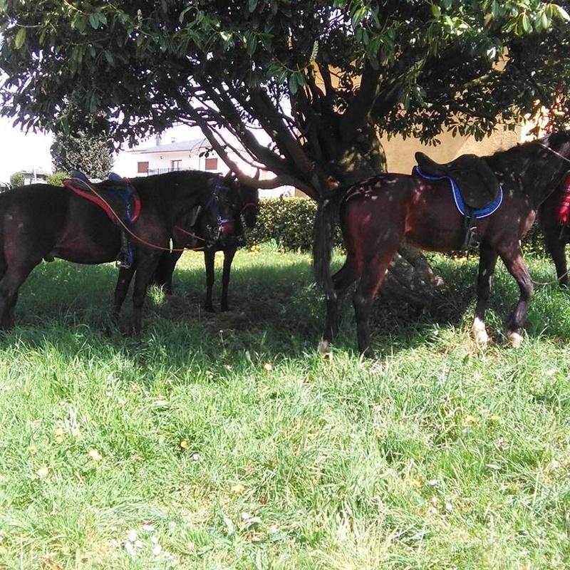 Rutas a caballo: Actividades de Taberna O´Cruceiro Multiaventura