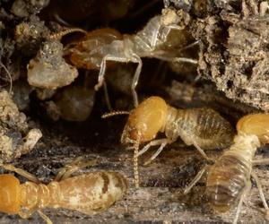 Empresa especialista en el control de insectos en Murcia