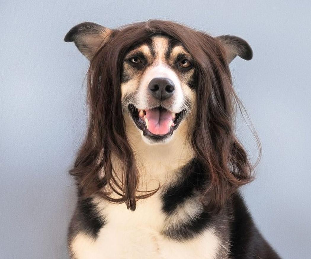 Cuida del pelo de tu mascota