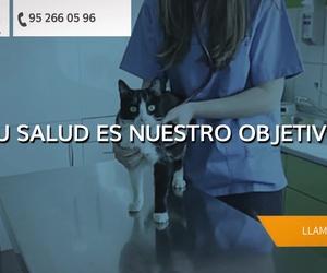 Veterinario de urgencias en Torremolinos | Clínica Veterinaria Vetsur