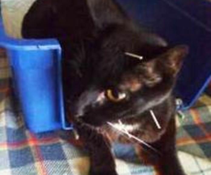 Acupuntura veterinaria: Qué hacemos de Vetsana