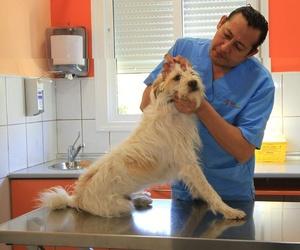 Profesionales para la salud de tu mascota