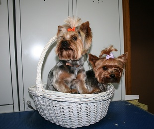 Estilista de mascotas