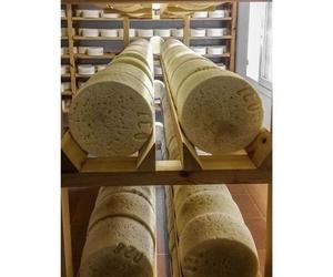 Distribución de quesos a nivel nacional