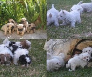 Venta de cachorros de todas las razas