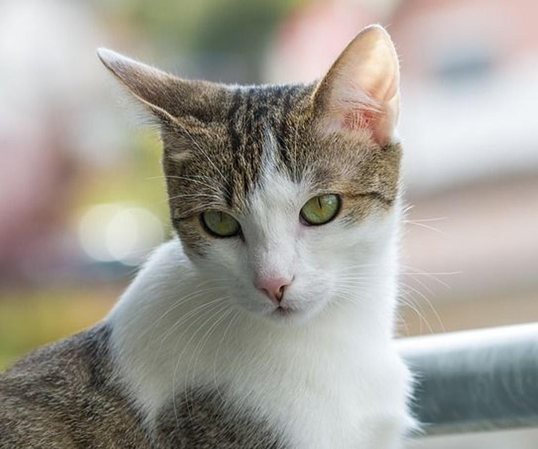 Protege a tus mascotas con cerramientos en ventanas y balcones