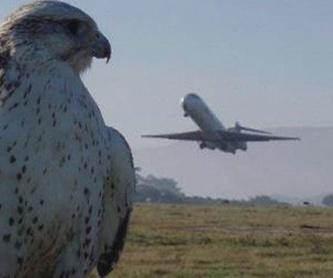 Exhibiciones estáticas y de vuelo de rapaces: Servicios de Juan Falcon