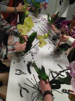 Orquideas sin tiesto
