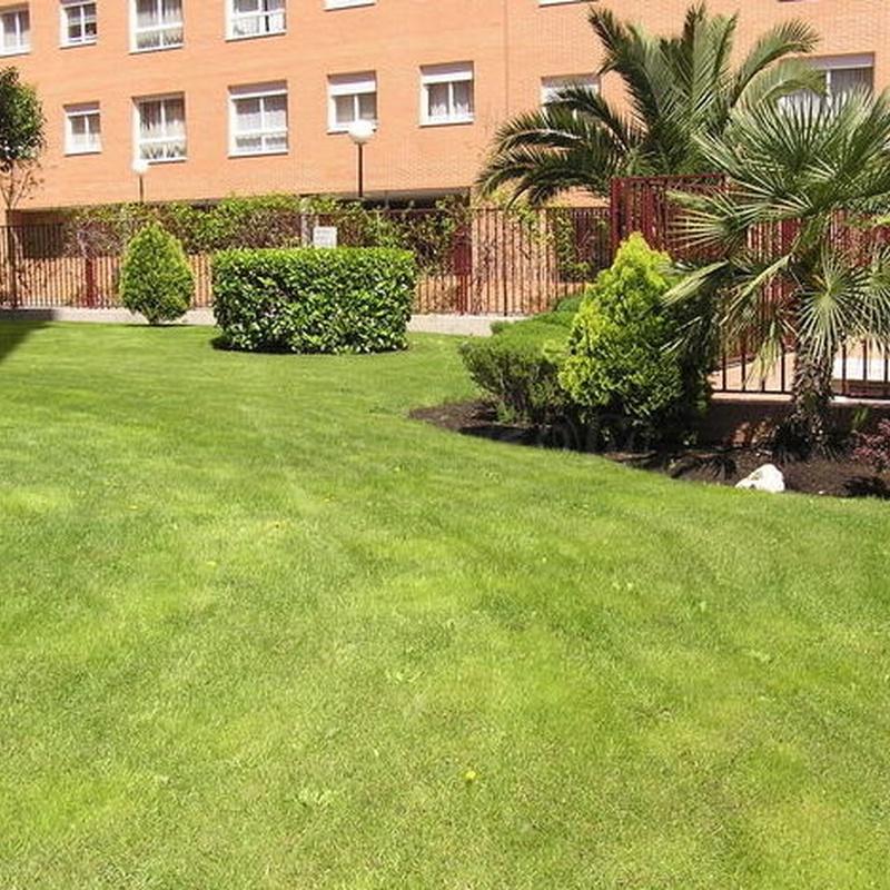 Jardinería: Servicios  de Jardinería Naranjo