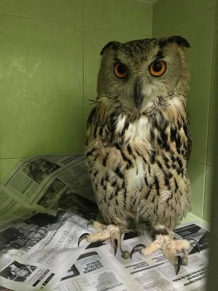 Hospitalización: Servicios de Clínica Veterinaria y Residencia Zoopark