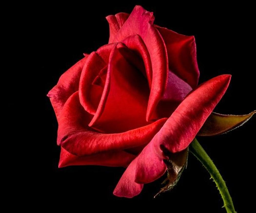 Una flor para cada ocasión