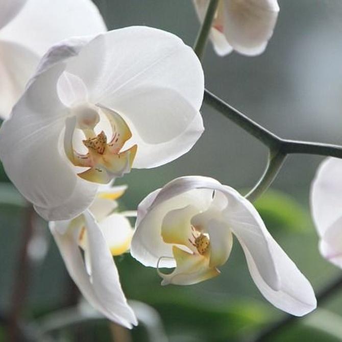 5 cuidados básicos de las orquídeas