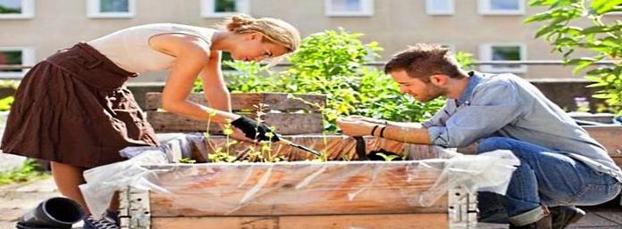 Cultiva tu propio huerto : Huertos de Huertos Azor