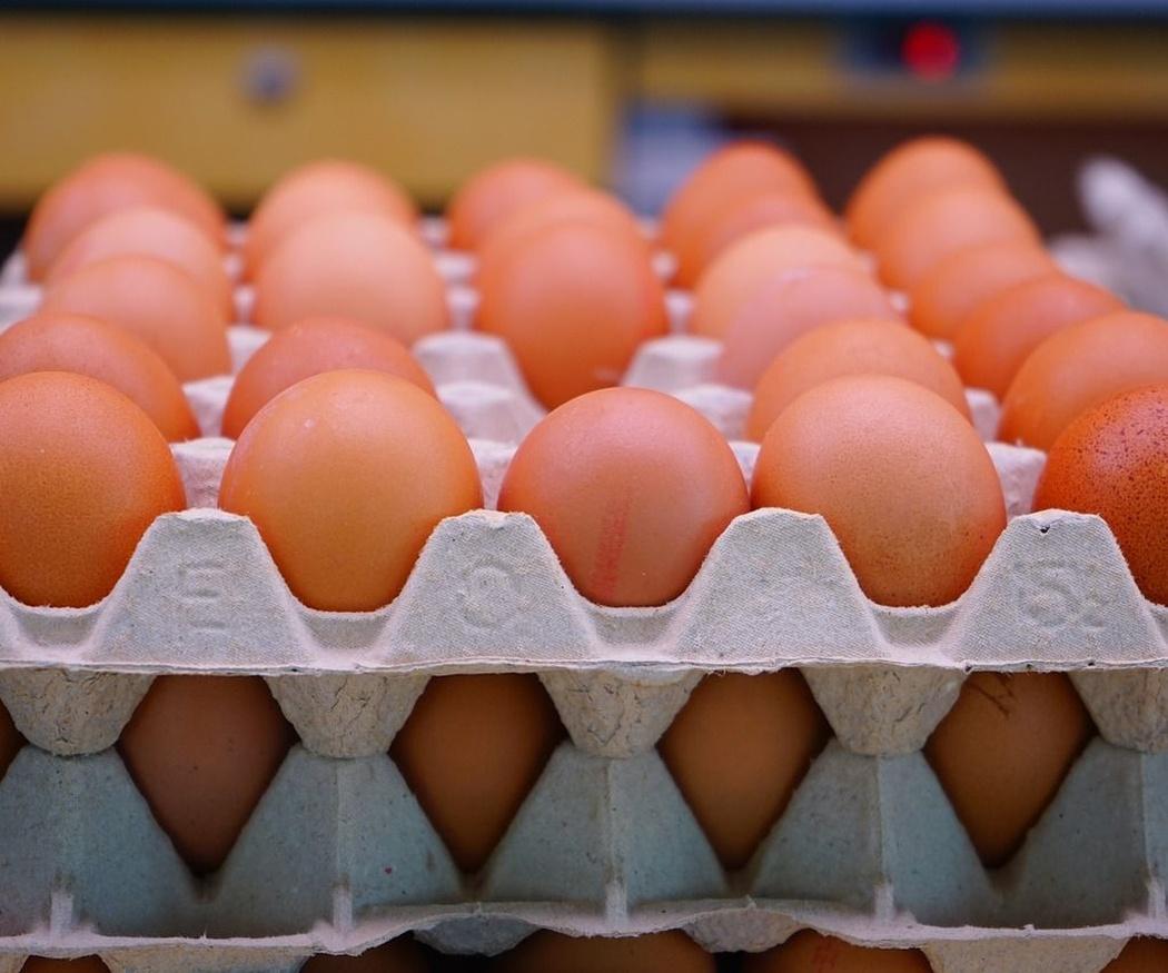Cuidados en el transporte de productos alimenticios