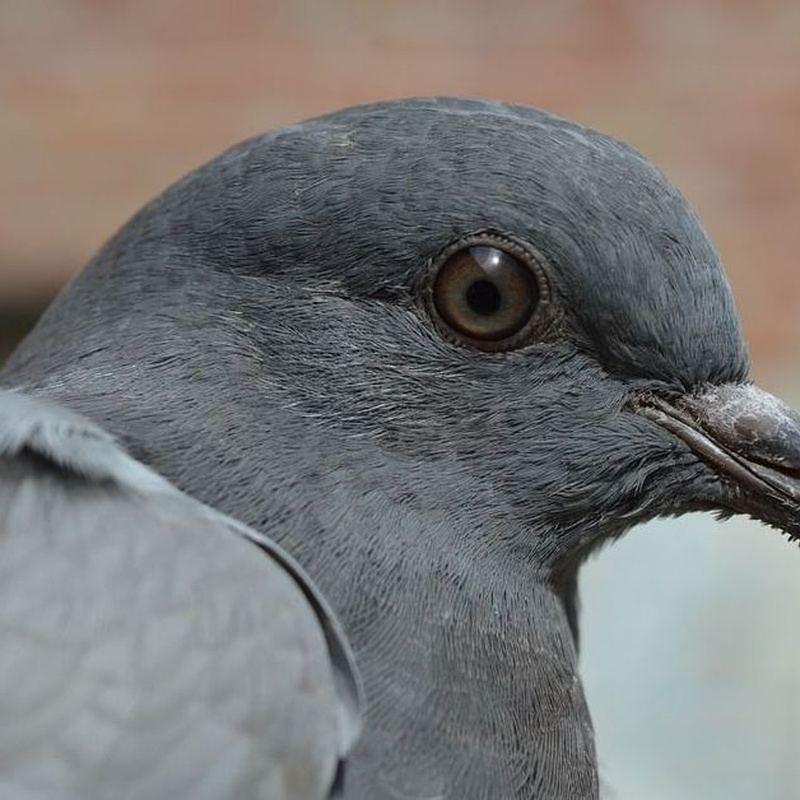 Control de aves : Servicios  de Tresdes
