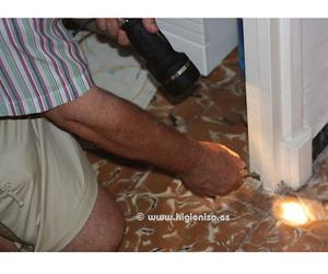 Especialistas en eliminación de termitas en Alicante