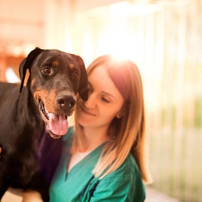 Claves para elegir al mejor veterinario